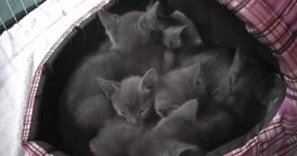 Listen to the sound when he puts his camera into a bed of kittens… Turn up your volume!!