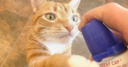 Man takes out the whip cream bottle, but when the cat hears the sound… Now watch how he reacts!