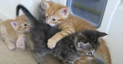 Puppy comes to break up the fight, but when the kittens notice him… Their response is HILARIOUS