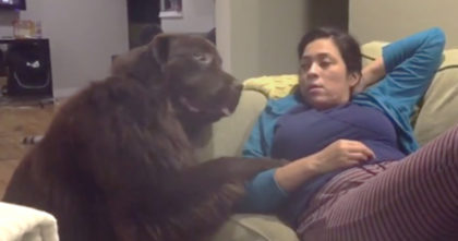 """She asked her dog if he was a """"bad boy today"""" but watch how he responds… This Is TOO MUCH."""