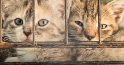 Taiwan just became FIRST Asian state to ban eating of cat and dog meat, but there's even more…
