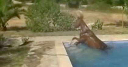 They didn't believe him when he described the horse's afternoon ritual, so he recorded THIS…