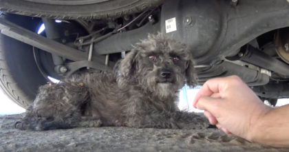They found an abandoned dog on the streets, but then they find another surprise under the bushes