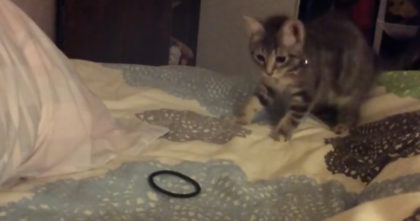 Watch the kitten's reaction when he discovers a hair tie for the first time… Just TOO funny, I love it!!