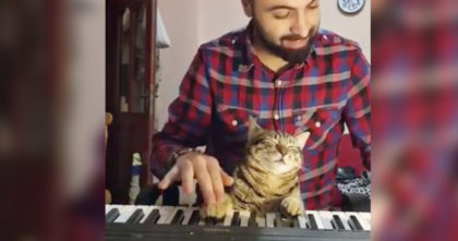 He put his cat's paws on the piano. When I saw what he does next, I can hardly handle it – SOO CUTE