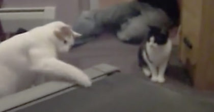 He setup a camera to record his cats reaction, but when he turns it on… It's the funniest thing ever!!
