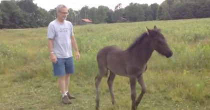 He stops scratching the baby horse, but how she reacts towards him? — Now I can't stop laughing!!