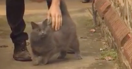 Man adopts one-eyed cat, but never relized what he would to for him… THIS left me in disbelief!