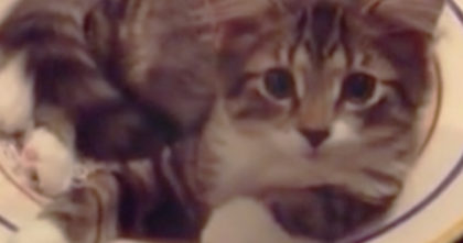 "She asks her cat ""What Are You Doing?"", but when he looks up, just listen to the response…"