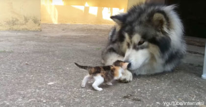 They adopted an orphaned kitten, but then they introduced him to the puppy and saw it…