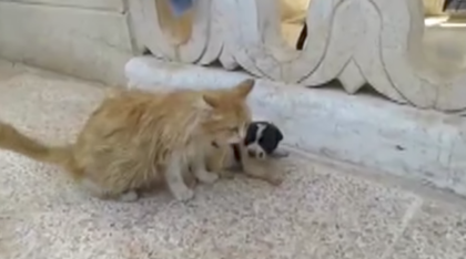 Puppy crying for someone to save him, then cat has emotional reaction when she sees him laying on floor