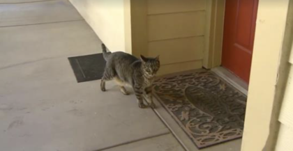 Cat begging to go outside, then women realizes he was trying to show her something important