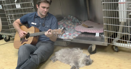"Cat hurting after surgery, when doctor notices he's in pain, he starts singing, ""And I love you…"""