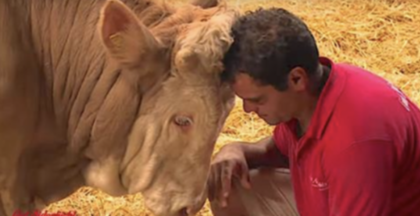 Cow Has Been Abused, Chained For Entire Life, Then Has Heartbreaking Reaction When He's Finally Freed