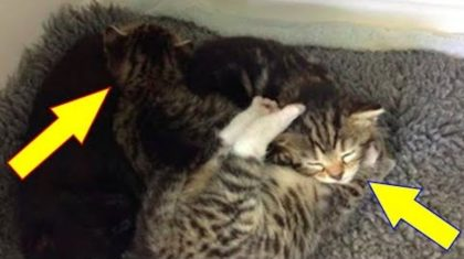 People rescued kittens, but after bringing them to the shelter, they hear frantic scratching on the door