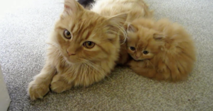 Kitten Huddles By Mother For Comfort, But Then The Camera Zooms Out And Then…Just TOO Cute!!