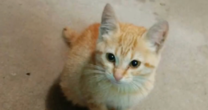Kitten meowing for someone to save him and keep him warm on freezing night, then man sees him