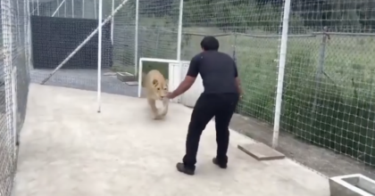 Lion Walks Out, Instantly Recognizes Her Old Caretaker – Now Watch Her Reaction When She Sees Him!