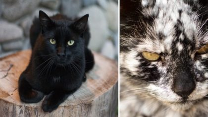 Man Adopts Normal Black Cat, Then 7-Years Later, It Totally Transforms Into Most Unexpected 'Look'