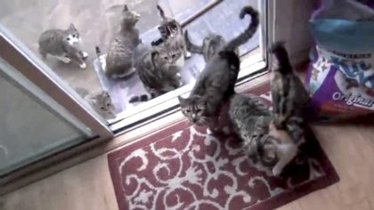 Man gets adorable surprise when he goes to open the door – It happens every day when he wakes up!