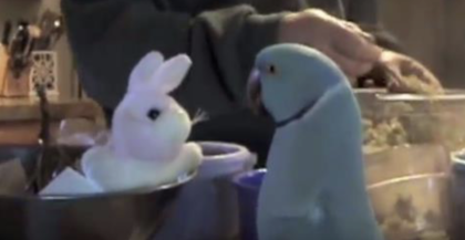 They gave Their Parrot a Stuffed Bunny For His Birthday, Now listen to how he responds when he sees it