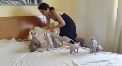 """She tries to make her bed, but when 10 excited kittens try to """"help"""" her… It's literally impossible."""