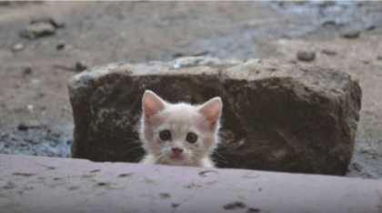 Stray kitten begging for someone to save him, then man answers his request when he decides to stay