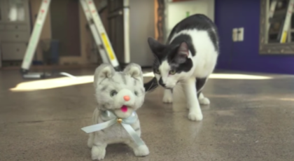 They Got Their Cat A New Toy And Brought In Into The Room – Now Watch When he Discovers It On The Floor