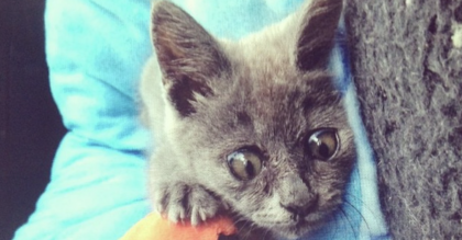 Women finds kitten with 'weird' looking eyes in driveway. – Vets said he would die, but she took a chance