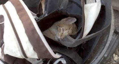 Women opens trash can, then finds cat suffocating in backpack, trapped in plastic bag and nearly dead